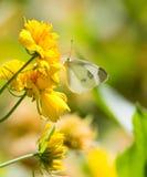 butterfly flower стоковое фото