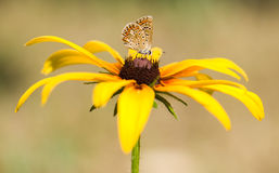 Butterfly, flower. The beautiful butterfly sits on a flower Royalty Free Stock Images