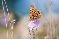 Butterfly on a flower. Beautiful butterfly on a flower stock photos