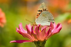 Butterfly on the flower. Close-up butterfly on the flower Stock Photography
