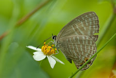 Butterfly on the flower. For background use Royalty Free Stock Images