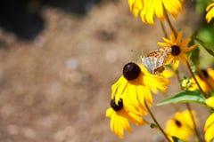 butterfly flower royaltyfria foton