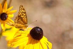 butterfly flower arkivbilder
