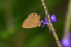 Butterfly, flower Royalty Free Stock Photo