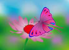 Butterfly, flower Royalty Free Stock Image
