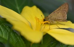 butterfly flower στοκ εικόνα με δικαίωμα ελεύθερης χρήσης