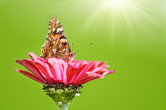 Butterfly on flower Stock Photography