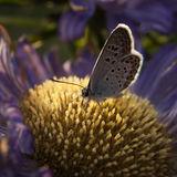 Butterfly and flower... Stock Images