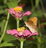 Butterfly at the flower Stock Photo