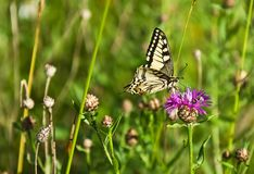 Butterfly on the flower. On green meadow Stock Photo