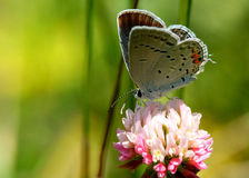 Butterfly on flower. A close up view of a butterfly as it perches on a colorful flower in a field Stock Image
