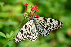 A butterfly on the flower Royalty Free Stock Image