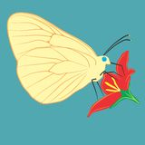 Butterfly on a flower. An a vector illustration of butterfly on a flower . Files included: Illustrator 8 EPS and JPG Vector Illustration