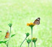 butterfly flower 免版税图库摄影