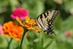 Butterfly Flower. Image taken of a butterfly resting on a flower Stock Image