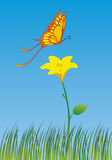 Butterfly on flower. Vector Illustration of butterfly on flower Vector Illustration