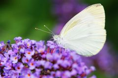 Butterfly and flower. The butterfly fall a plant Stock Photos
