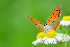 The butterfly and flower. The butterfly fall a plant Stock Photography