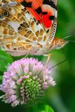 The butterfly and flower. The butterfly fall a plant Stock Images