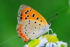 The butterfly and flower. The butterfly fall a plant Stock Image