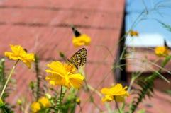 butterfly flower Στοκ Φωτογραφία