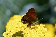 butterfly flower Стоковое Изображение