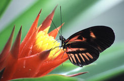 Butterfly on a flower. Tropical butterfly in a house of butterflies Stock Images