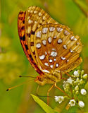 Butterfly on flower. Close up of colorful butterfly on flower, green background Stock Photos
