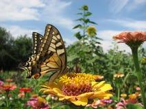 butterfly flower 库存照片