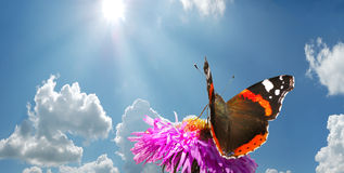 Butterfly on flower. Against blue cloudy sky with sun Stock Image