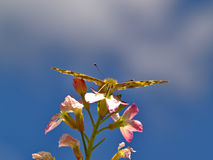 The butterfly on a flower against blue sky Stock Image
