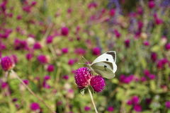 Butterfly on a flower. In Andalusia from Spain Stock Photos