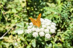 Butterfly on a flower Stock Image