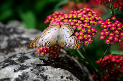 butterfly Flower arobics Stock Images