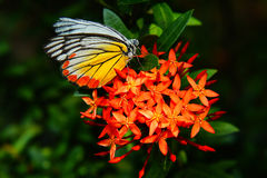 Butterfly and flower. This is a beautiful butterfly stock image