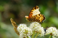 Butterfly and flower stock image