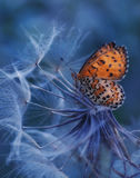 The Butterfly and  flower Royalty Free Stock Photo