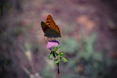 Butterfly on flower. Beautiful butterfly on a flower field Royalty Free Stock Images