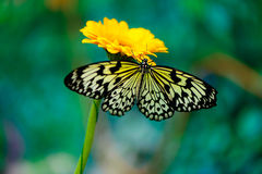 Butterfly on flower. Beautiful insect butterfly on a flower on a colored background macro royalty free stock photography