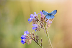 Butterfly and flower. Beautiful butterfly in my garden Royalty Free Stock Photos