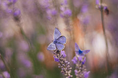 Butterfly and flower. Beautiful butterfly in my garden Stock Images