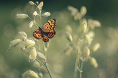 Butterfly and flower. Beautiful butterfly in my garden Royalty Free Stock Photo