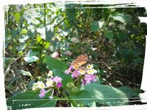 Butterfly in flower. Beautiful butterfly in flower picture in spring Royalty Free Stock Photos