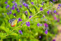 Butterfly on flower -Blur flower background Stock Photo