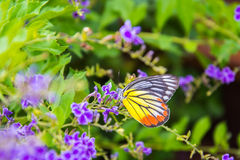 Butterfly on flower -Blur flower background Royalty Free Stock Images