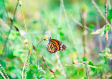 Butterfly on flower -Blur flower background Stock Image