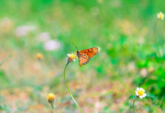 Butterfly on flower -Blur flower background Royalty Free Stock Photo