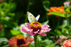 Butterfly. On flower with bokeh background stock photo