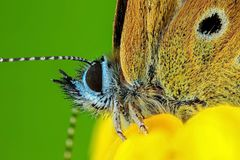 Butterfly on a flower. Butterflies are flowers that the wind tore. Macro shot. Butterfly on a flower. Butterflies are flowers that the wind tore. Closeup. Macro stock photography