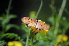 The Butterfly On A Flower stock photography